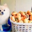 秋の犬文字