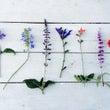 ハーブの花 & et…