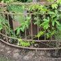 すき間花壇の発芽苗