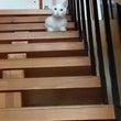 落っこちたぞ~【猫/…