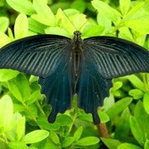 10月の蝶