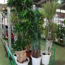 市場の植物から