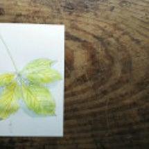 葉っぱのお絵描き