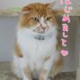 猫の口内炎奮闘記1