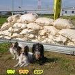 湘南タゲリ米 収穫完…