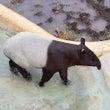 マレーバク~多摩動物…
