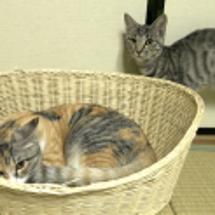 モモと保護猫ちゃん