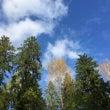 フィンランドの森は意…