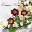 Emma Roseア…