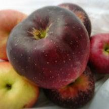 林檎の話…