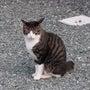 ダヤンに似ているネコ