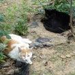 となり街の猫さん~黒…