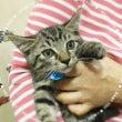 子猫発見…そして保護…