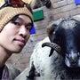 羊と共演??