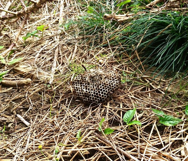 落としたハチの巣
