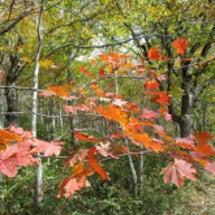 紅葉の尾瀬