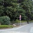 宝持院土居/静岡県御…