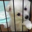 担当犬紹介《ココナッ…
