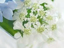オルレイヤ・グランディフローラ(花水季さん)