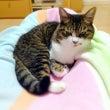 療法食 サニメド 猫…