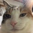 忠猫 姫公
