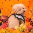 秋の撮影会 Part…