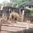 象にも体型の違いあり…
