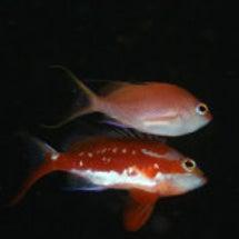 産卵と幼魚
