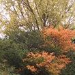 紅葉と雪虫