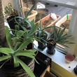 冬を迎える前の植物管…