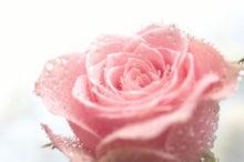 ピンクバラと水しぶき(1・2・3)