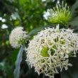 パロネラパークの植物…