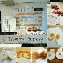 ■注目したのは、卵黄…
