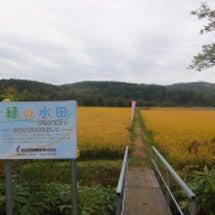 【CSR】稲刈りツア…