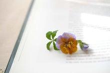 本の上のビオラ(花水季さん)