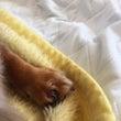 愛犬 爪の損傷