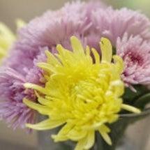 花を愛でる時間は少な…