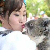 海外挙式でコアラ