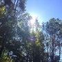 アルソア女神の森竣工…