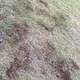 芝生の目土追加