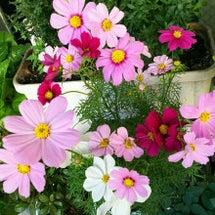 『ベランダの花』