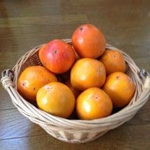 柿、収穫の秋