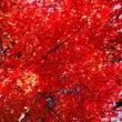 京都へ行きたい~