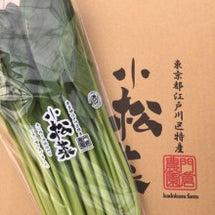 収穫(o^^o)
