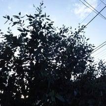 二日連続の太陽