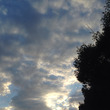 「黄色い太陽」の5日…