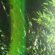 【笹の光の柱+ホトト…