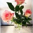 薔薇と教室作品