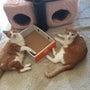 猫も食欲の秋真っ最中…