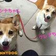 大阪 吹田 茨木犬し…